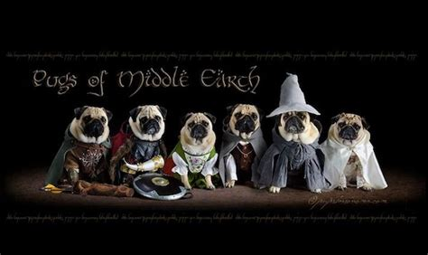 pugs of middle earth the pugs of middle earth randommization