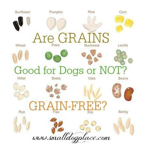 is grain free food better feeding dogs guide to small breed diet