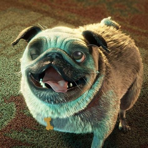 epic pug image gallery epic pug