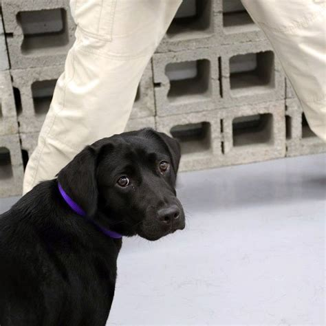 lulu  failed cia bomb sniffing dog  twitter meme