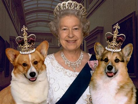 10 celebrities with corgis