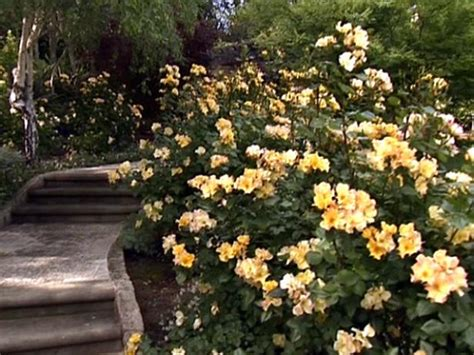 cut flower garden hgtv