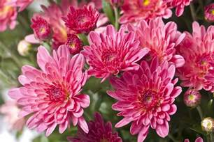 the best flowers for fall gardens