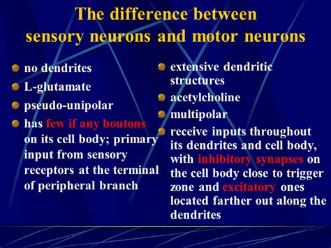 motor and sensory difference between sensory neuron and motor neuron