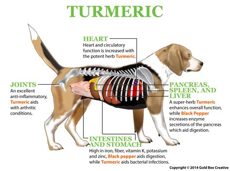turmeric paste for dogs give your a tbsp of this golden turmeric paste to relieve inflammation and