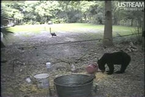 florida live wildlife camera streaming wildlife cam