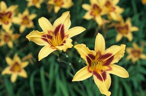 Garden Flowers Free Photo Flower Nature Garden Flowers Types Of Garden Flowers