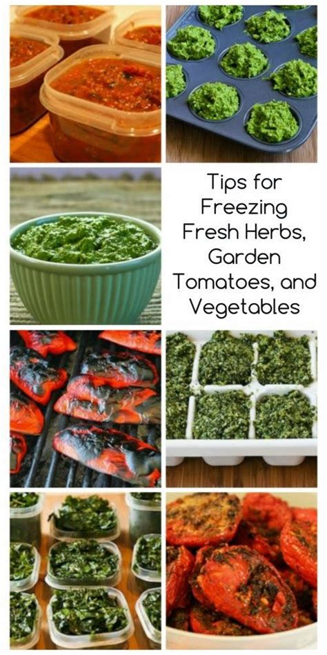 tips for freezing fresh herbs garden tomatoes and