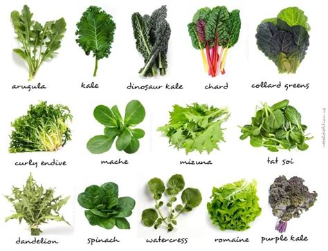 different type of leafy vegetable with name amrita luxury wellness retreat why we must all be more leafy green vegetables