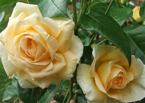 Bunga Pemikiran Keislaman wanita hitam pemetik surga senyumku dakwahku