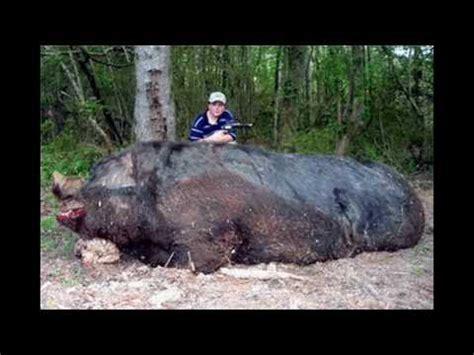 imagenes de animales jigantes animales gigantes grandes y raros youtube