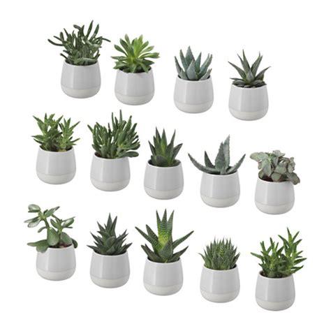 ikea vasi piante succulent pianta con vaso ikea