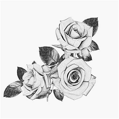 rose black and white tattoo 40 black and white designs