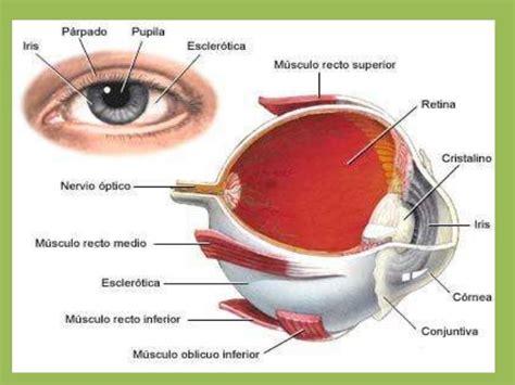 imagenes para relajar la vista el sentido de la vista