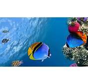 Download Wallpaper 3840x2160 Under Water Coral Fish Sea Ocean 4K