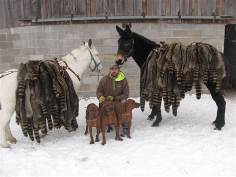 how to a to coon hunt coonhunting mules