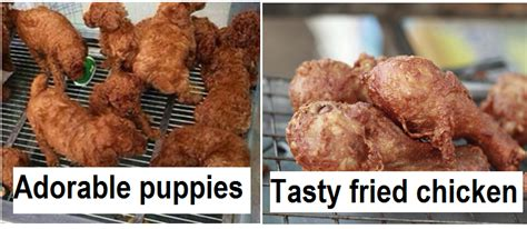 puppies that look like fried chicken dogs that look like bears 18 puppies that look like bears