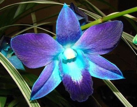 blue orchid tattoo best 20 blue orchid ideas on