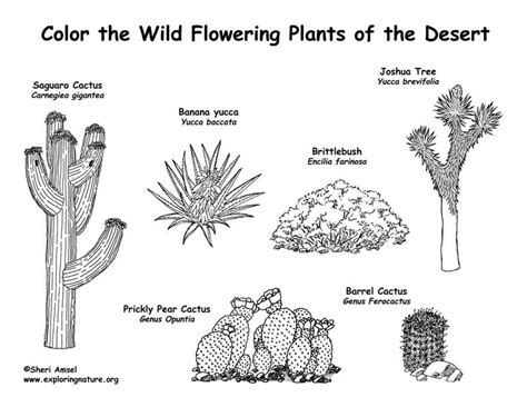 printable desert animal pictures coloring desert picture 171 free coloring pages