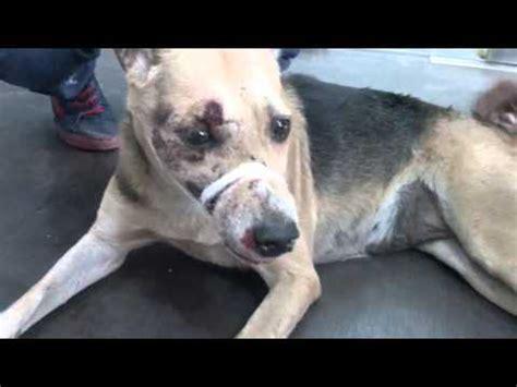 puppy beaten brutally beaten up by hari bhavu kamble in kandivali he is arrested