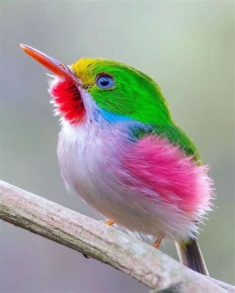 beautiful birds phots best 25 beautiful birds ideas on pretty birds birds and photos of birds
