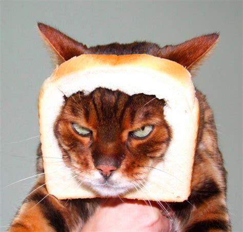 Cat Breading Meme - gayle tales in bread meme