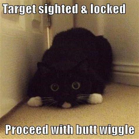 meme pictures top 30 cat memes cat memes memes and cat