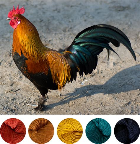 yarn color combo inspiration rooster gleeful things color combos yarn colors and inspiration