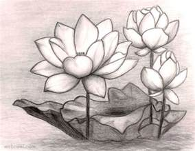 Lotus Flower Drawing 40 Beautiful Flower Drawings And Realistic Color Pencil Drawings