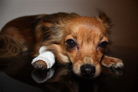 can dogs die from 3 reasons why dogs die and what we can do about it iheartdogs