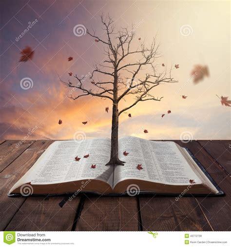 tree  bible stock photo image