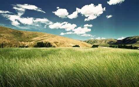 foggy grass landscape 6987585