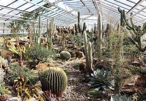 Botanischer Garten Berlin Pflanzen Kaufen by File Botanischer Garten M 252 Nchen Gew 228 Chshaus Mit Kakteen