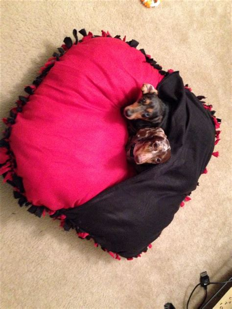 No Sew Dog Bed Craft Ideas Diy Pinterest