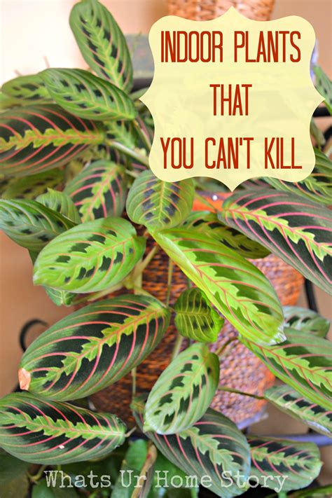 easy plants to grow inside indoor plants that you just can t kill whats ur home story