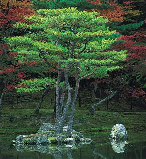 imagenes de naturaleza verdes la naturaleza taringa