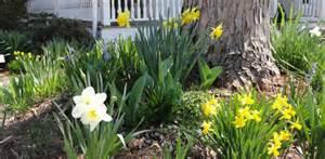 ten favorite flowering trees shrubs and plants for