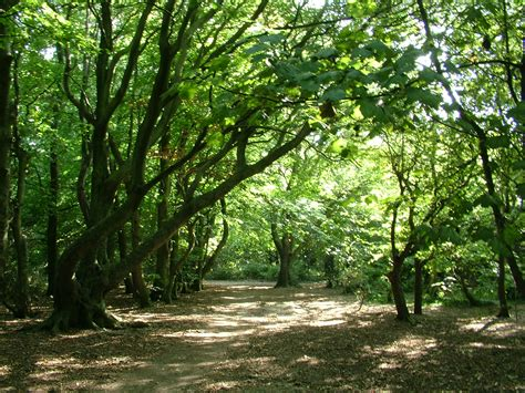 woodland tree the woodland friends of lancing ring