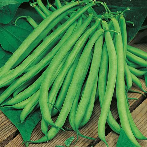 climbing bean plant climbing bean blue lake seeds from mr fothergill s seeds