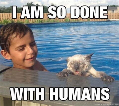 Im Funny Memes - this cat s so done with humans fun cat pictures