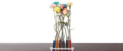 color changing carnations color changing carnation flowers science experiments