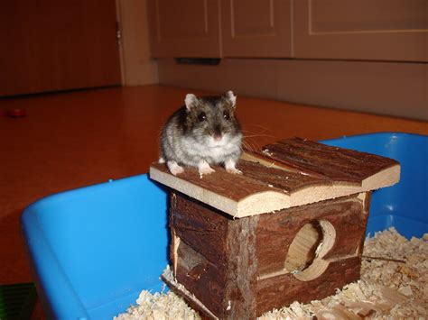 hamster house hamster accessories and supplies that every owner needs