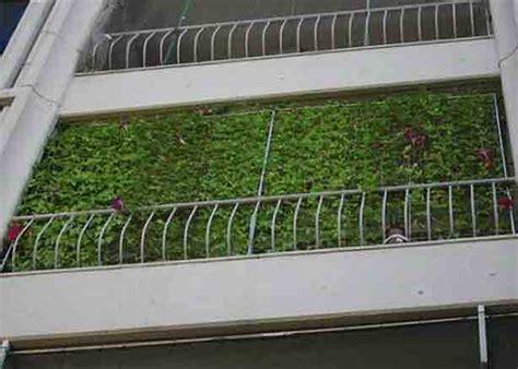 curtains balcony how to grow an energy saving living curtain urban gardens