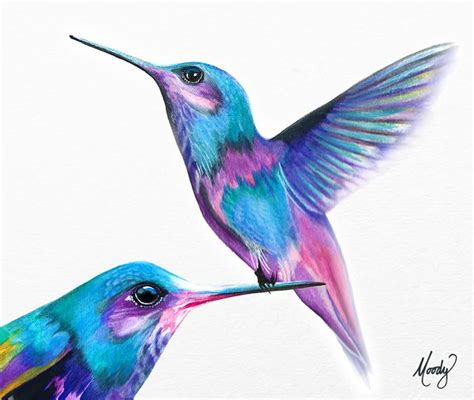 hummingbird drawing colour