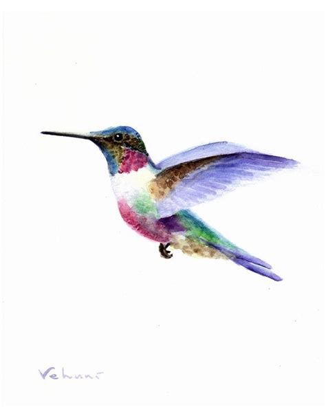 hummingbird colors 25 best ideas about hummingbird watercolor on