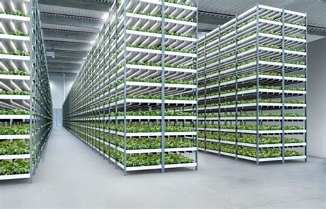 New Jersey House a massive aquaponic lettuce and fish farm will grow in