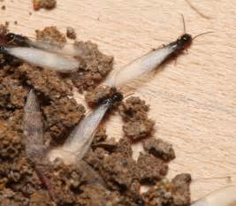 Garden Pests Control - ten top pests that can hurt your home insects in the city