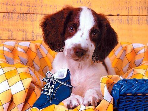 dog wallpaper dogs wallpaper 13632654 fanpop cute dog wallpaper dogs wallpaper 13936283 fanpop