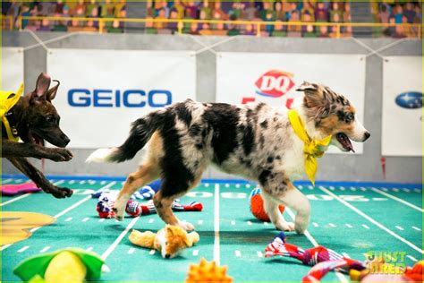 who won the puppy bowl 2017 puppy bowl 2017 meet the dogs the more photo 3853403 2017