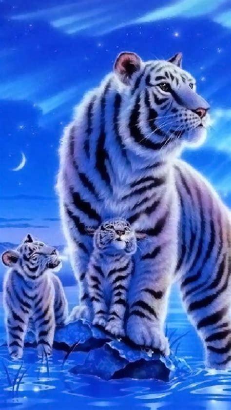 white tiger  babies tiger wallpaper tiger art cross